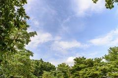 Baum mit einem Himmelhintergrund Stockbilder