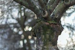 Baum mit einem lustigen denkenden Gesicht Vorfrühlingswetterkonzept Lizenzfreie Stockfotos