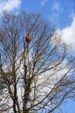 Baum mit einem Nest Lizenzfreie Stockfotos