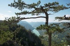 Baum mit einer Ansicht Stockbild
