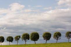 Baum mit einer kugelförmigen alten Frau auf einer grünen Lichtung Lizenzfreie Stockfotos