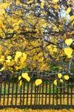 Baum mit fallenden Blättern lizenzfreies stockfoto