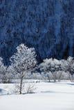 Baum mit Frost Stockbilder
