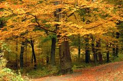 Baum mit gelben Blättern lizenzfreies stockbild