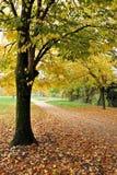 Baum mit gelben Blättern lizenzfreies stockfoto