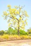 Baum mit gelben Blumen Lizenzfreie Stockbilder