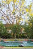 Baum mit gelben Blumen Lizenzfreie Stockfotos