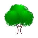 Baum mit grünem Laub Lizenzfreie Stockfotos