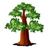Baum mit grünen Blättern Stockfoto