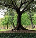 Baum mit Gras in einem Park Lizenzfreies Stockfoto