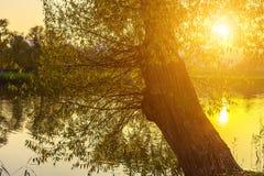 Baum mit großem Stamm durch See mit hellem Sonnenschein Lizenzfreie Stockbilder