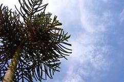 Baum mit Himmelhintergrund Stockfotos