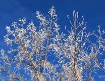 Baum mit Hoarfrost lizenzfreies stockbild
