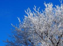 Baum mit Hoarfrost stockfoto