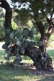Baum mit Kaktus Stockfoto