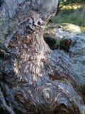 Baum mit Knoten stockfoto