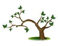 Baum mit knotigen Zweigen Lizenzfreie Stockfotos