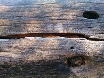 Baum mit Löchern stockfotografie