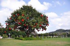 Baum mit Lotlaternen Stockfoto