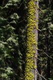 Baum mit Moos stockfotos