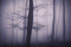 Baum mit Niederlassungen im mysteriösen Wald mit Nebel Lizenzfreie Stockfotos