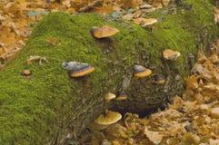 Baum mit Pilzen Lizenzfreie Stockfotos