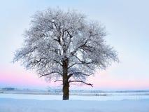 Baum mit Raureiffrost in der Winterlandschaft Stockfoto