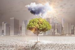 Baum mit regnerischer Wolke Stockfotografie
