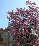 Baum mit rosa Blumen Lizenzfreies Stockbild