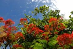 Baum mit roten Blumen Stockfotos