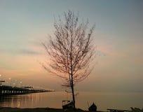 Baum mit schönem Niederlassungsschattenbild Stockfoto