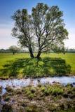 Baum mit Schatten Lizenzfreies Stockfoto