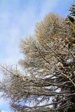 Baum mit Schnee Stockfotografie