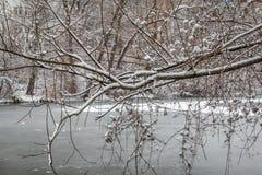 Baum mit Schnee durch einen gefrorenen Fluss Stockbilder