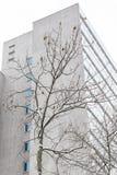 Baum mit Schnee und einem Gebäude Lizenzfreie Stockfotografie