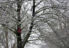 Baum mit Schnee- und Vogelhaus Stockfoto