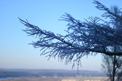 Baum mit Schnee unter Sonnenuntergang Lizenzfreies Stockfoto