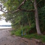 Baum mit Schwingen lizenzfreie stockbilder