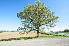 Baum mit sieben Sternen Stockfotografie