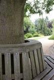 Baum mit Sitz und Garten jenseits Stockbilder
