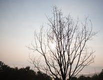 Baum mit Sonne Stockfoto