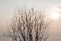 Baum mit Sonne Stockfotografie