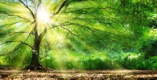 Baum mit Sonnenschein im wilden Wald Stockfotografie