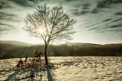 Baum mit Sonnenstrahl und Blendenflecken am Winter HDR Lizenzfreie Stockfotos