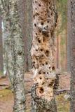 Baum mit Specht-Löchern lizenzfreie stockfotografie