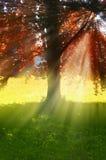 Baum mit Strahlen der Sonne Lizenzfreies Stockfoto