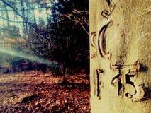 Baum mit Text Stockbilder