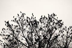Baum mit Vögeln Stockfotos