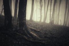 Baum mit verdrehten Wurzeln in frequentiertem Halloween-Wald mit Nebel Stockbilder