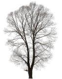 Baum mit vielen bloßen Zweigen Stockfoto